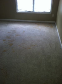 Carpet Cleaning Bristow VA - before
