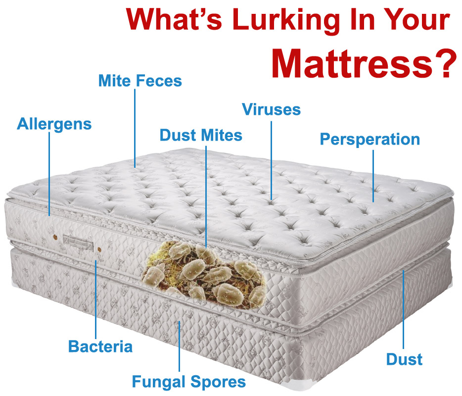 Clean A Mattress With Bed Bugs